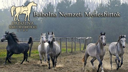 babolna_600